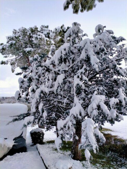 san-severino-neve-febbraio-2021-4-488x650