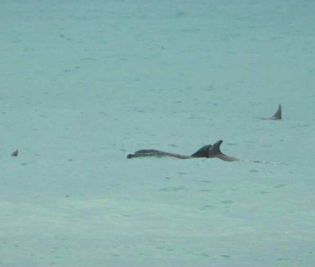 delfini-1-650x551
