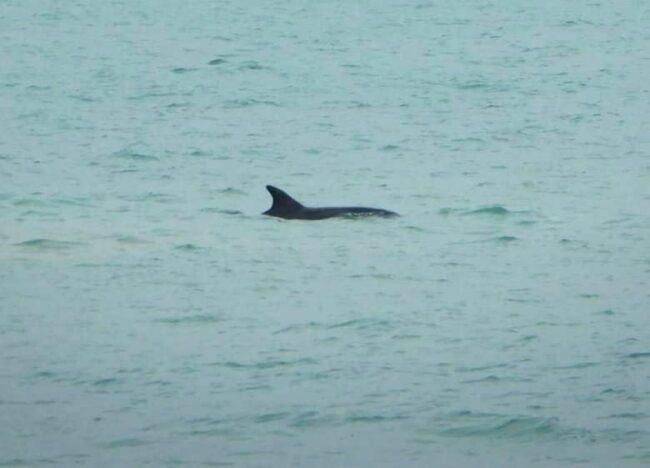 delfini-2-650x468