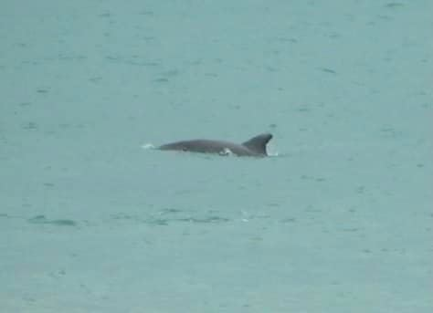 delfini-3