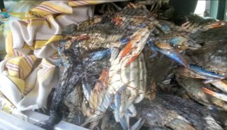 pesce_sequestro2-325x187