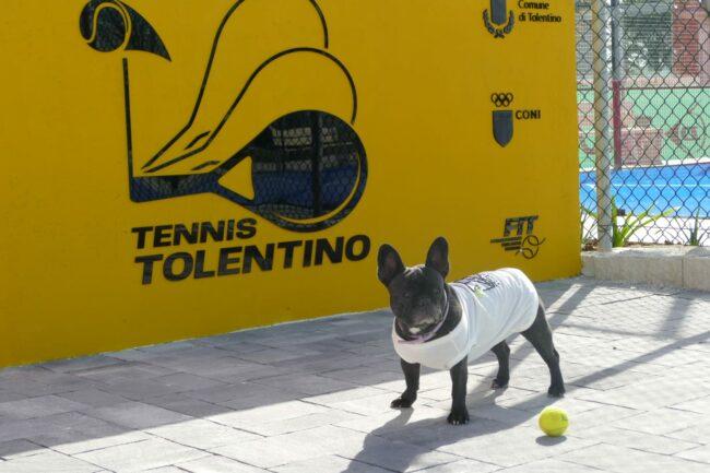 tennis_tolentino_mascotte_coco
