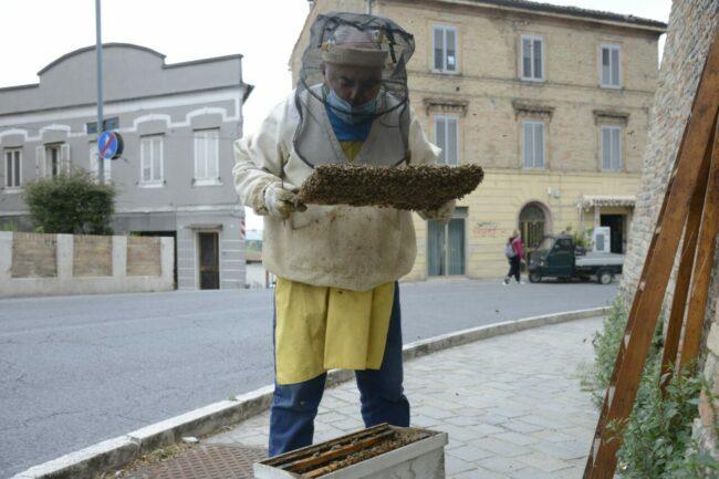 Alveare-api-mura-7-650x433