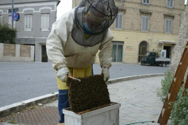 Alveare-api-mura-9-650x433