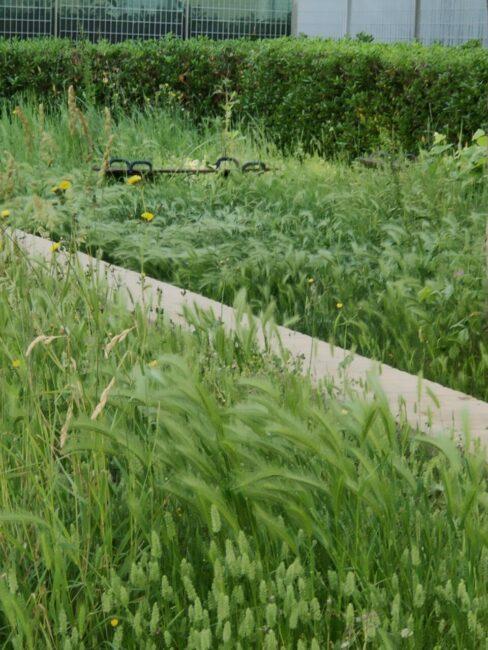 erba-alta-via-crivelli