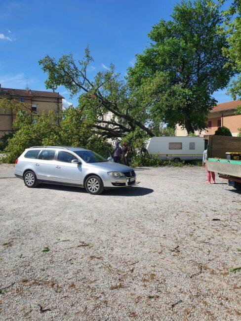 quercia-passo-bidollo-2-488x650