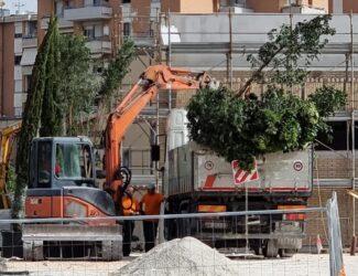 alberi-tagliati-ex-casermette1-325x250