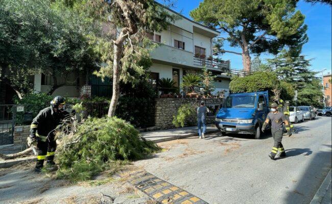 pino-caduto-villa-eugenia-1-650x400