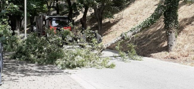 albero-caduto-tolentino2-650x300
