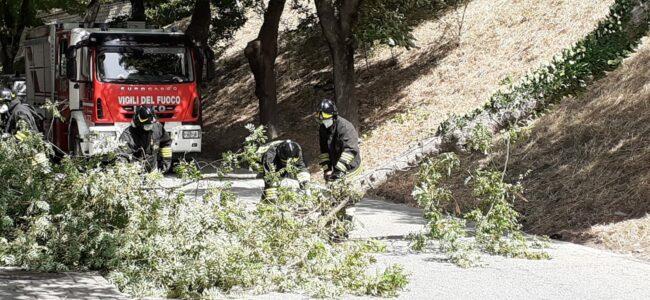 albero-caduto-tolentino3-650x300