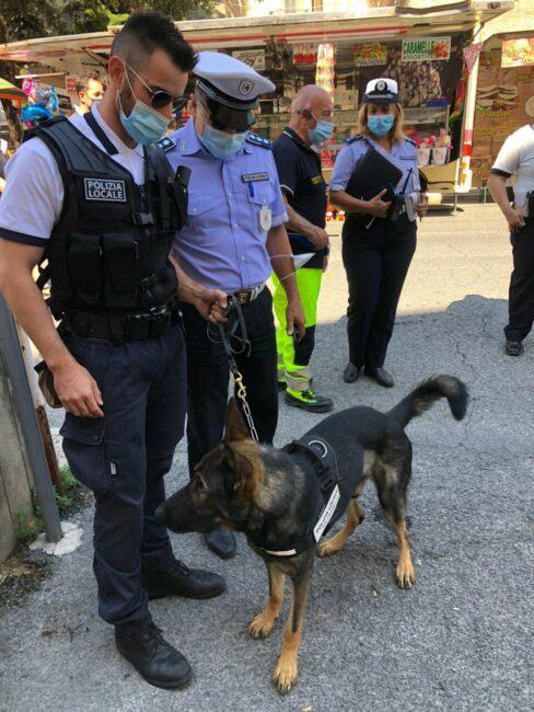 attivita-di-controllo-Polizia-locale-per-san-Giuliano-5-488x650