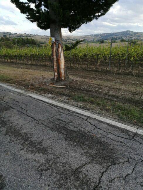 albero-incidente-urbisaglia