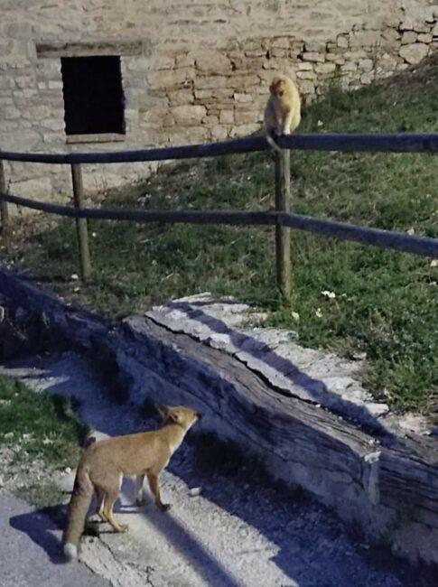 animali_in_citta-1-485x650