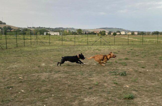 area-cani-piediripa-24-650x424