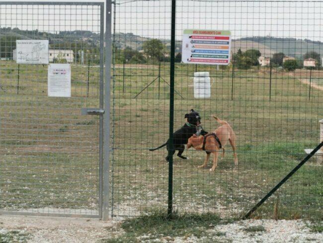 area-cani-piediripa
