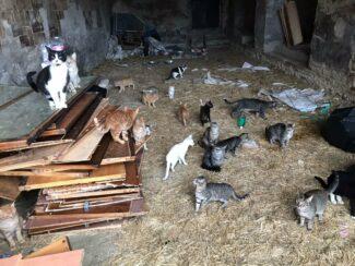 gatti abbandonati maxi abbandono treia passo di treia oipa zampamicia622_4337601863017507_3742740736745275449_n
